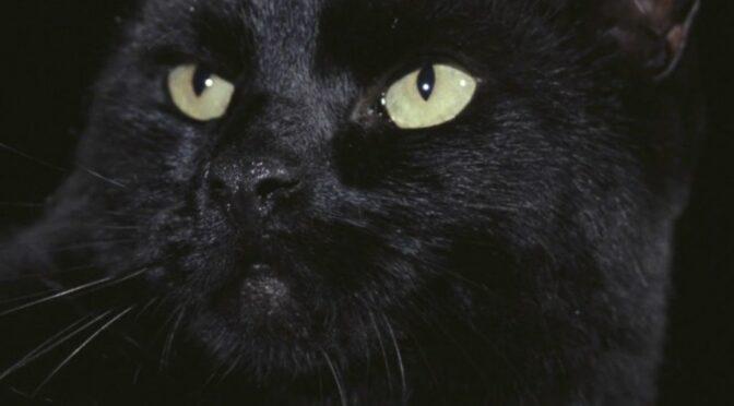 Recensie: The Black Cat (Lucio Fulci)